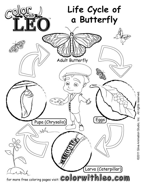Pdf Coloring Page For Kids Life Cycle Of A Butterfly Jpg