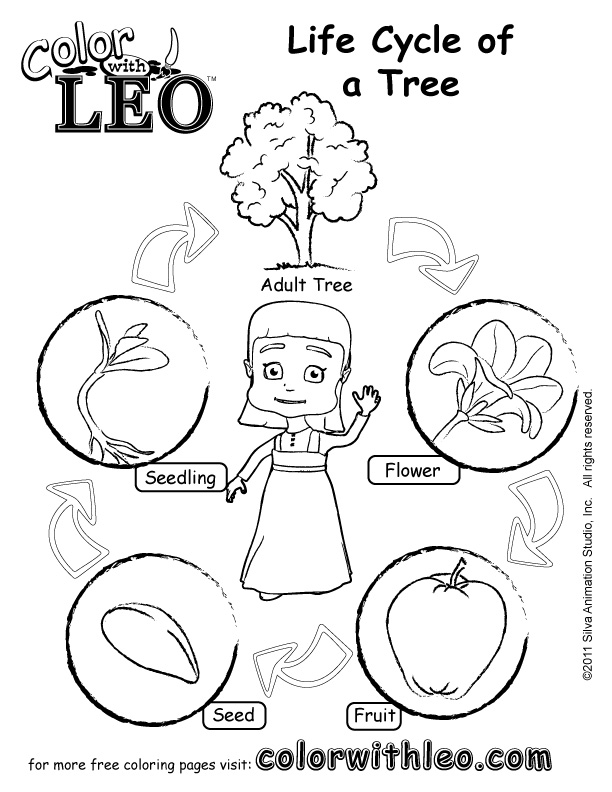 Life Cycle Of A Tree For Kids Worksheet | www.imgarcade.com - Online ...